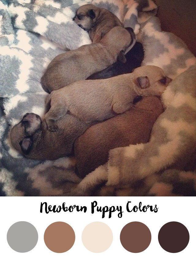 Newborn Puppy Color Palette - RKA ink
